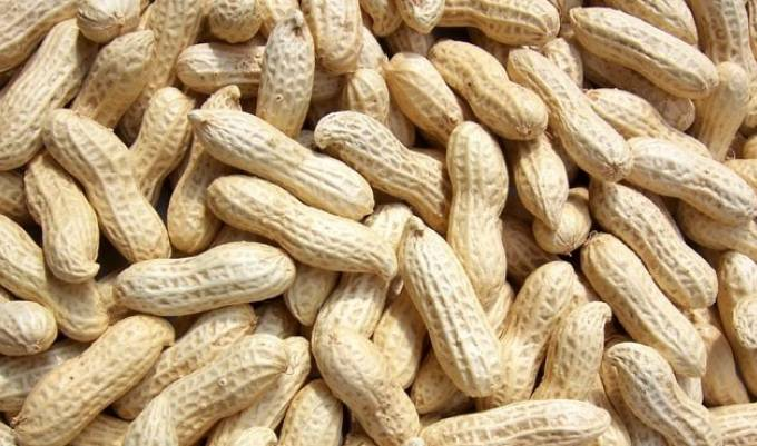 Indian groundnut